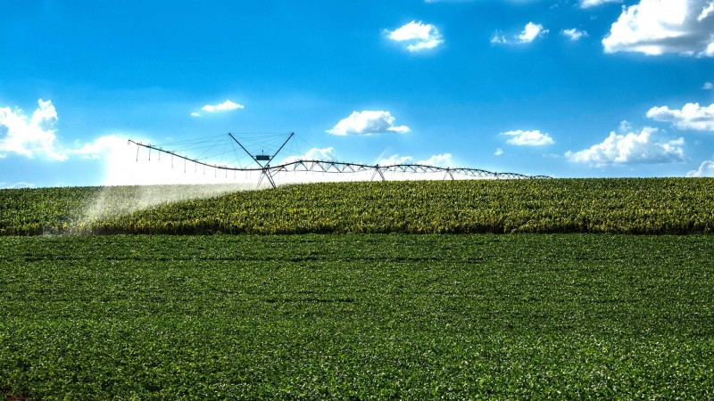 irrigação milho