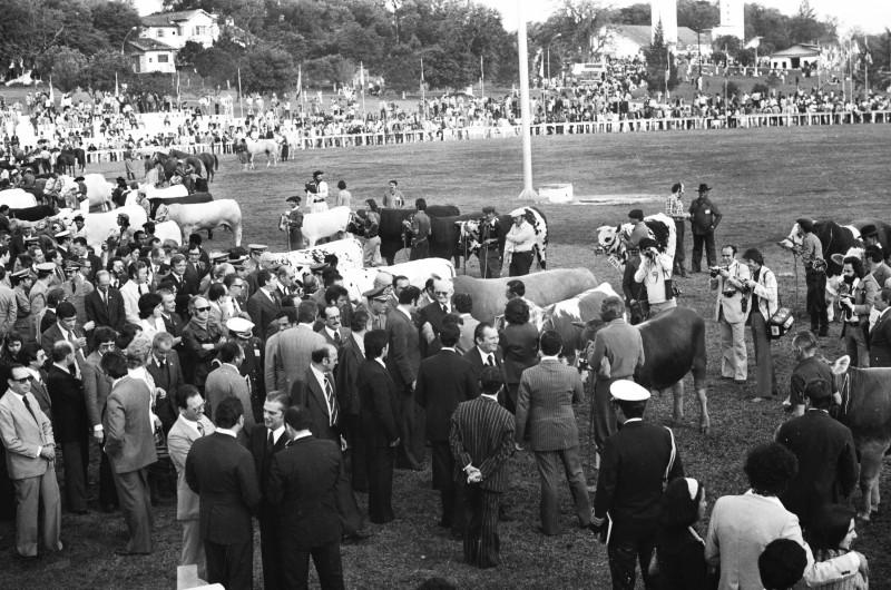 Desfile dos grandes campeões da primeira Expointer